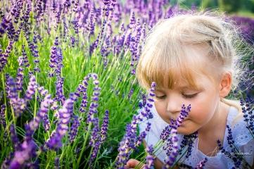 Lavender fairies. Pic 30
