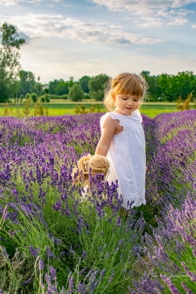 Lavender fairies. Pic 28