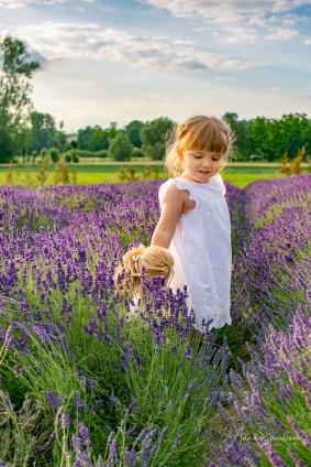 Lavender fairies. Pic 28