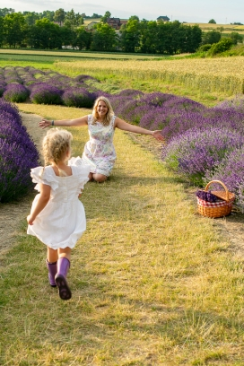 Lavender fairies. Pic 21