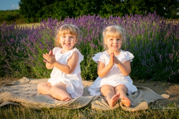 Lavender fairies. Pic 14