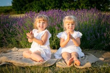 Lavender fairies. Pic 14