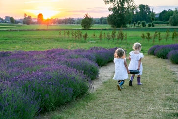 Lavender fairies. Pic 7