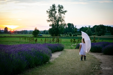 Lavender fairies. Pic 6
