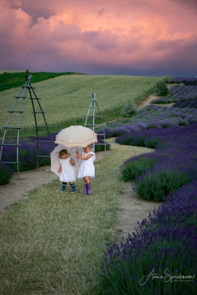 Lavender fairies. Pic 5
